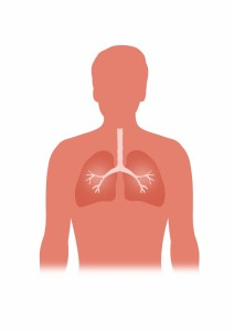 1797784-lungs